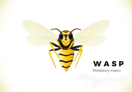 Wasp cartoon illustration isolated on white background. poisonous insect. Yellow wasp. Vector