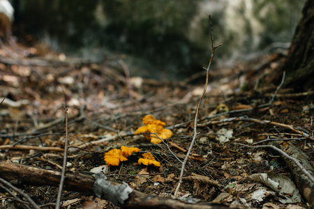 Autumn forest scenery with mushrooms