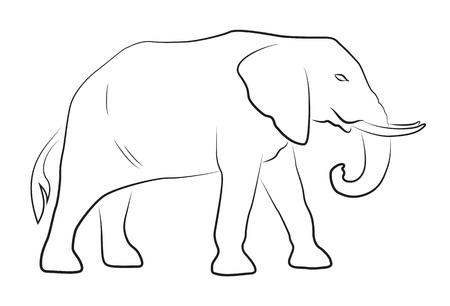 elephant head: Elephant on white background