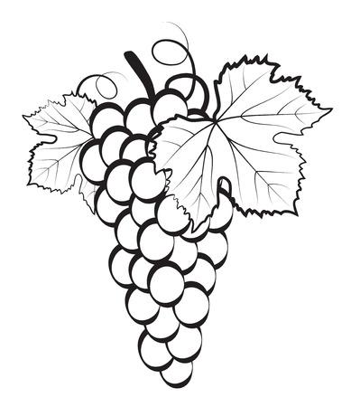 Grappe de raisin sur fond blanc