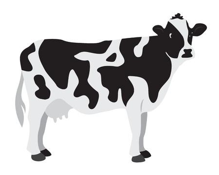 vacas lecheras: Vaca en un fondo blanco