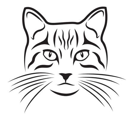 gato dibujo: La gata sobre el fondo blanco