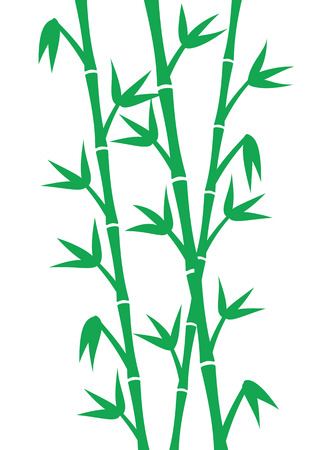 lucky bamboo: Green bamboo stems on white background