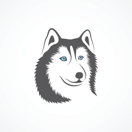 dog sled: Siberian Husky on white background. Vector illustration.