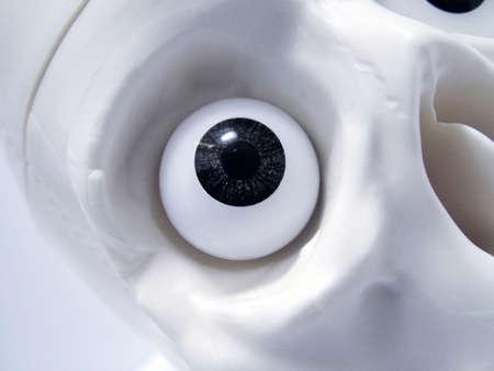 The skull eye socket Stock Photo - 3192705