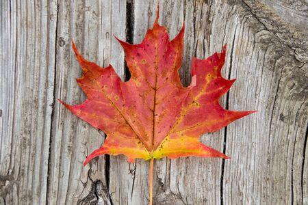 Red maple leaf on vintage wood
