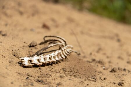 Spinal cord bones in a sandy environment Imagens