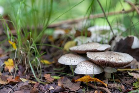Mushrooms growing on wood in forest