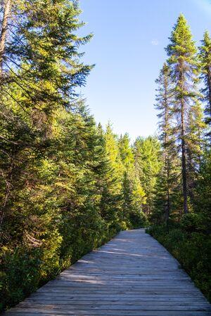 Spruce Bog Boardwalk summer landcape with trees and blue skies