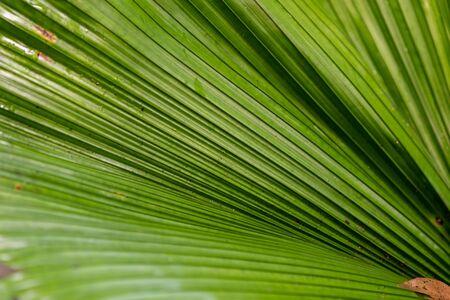 Tropical leaf close up Zdjęcie Seryjne