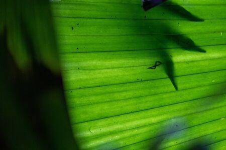 Tropical leaves Zdjęcie Seryjne