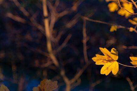 Autumn leaf copy space