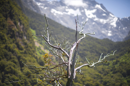 dead branch of tree present with mountain snow in background