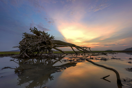 Dead tree laying on the lake at lowest tide in the sunset skyline