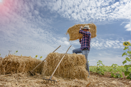 chaff: Farmer working carry on chaff of litter in field