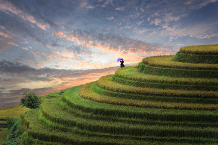 Rice field terrace at sunset with local farmer watching