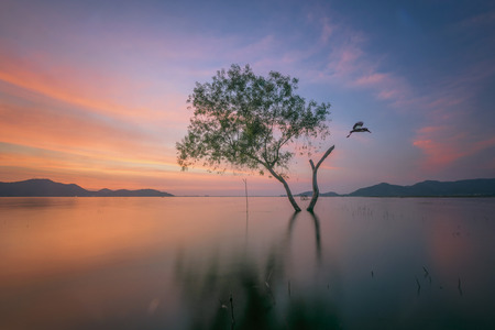 alone alive tree is in the flood of lake at sunset scenery