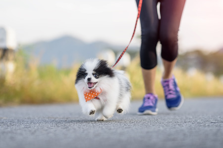 puppy dog running exercise on the street park in the morning Archivio Fotografico