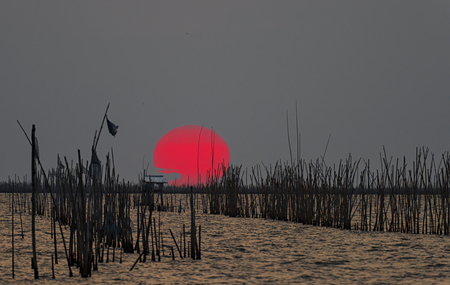 chinese fishing nets: large sunset to the sea with row of bamboo traps