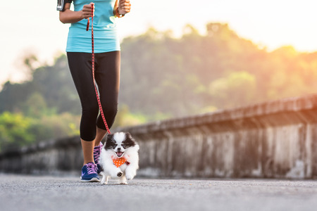 puppy dog running exercise together with woman in the morning Stockfoto