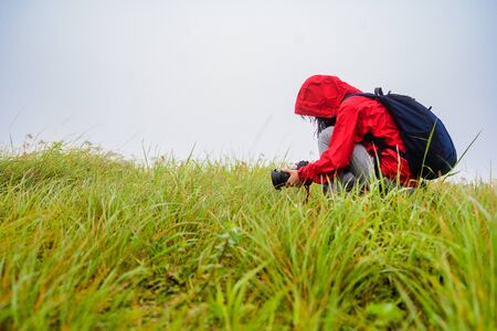 woman researcher doing takes photo of grass environment on the hill mountain with misty in morning surrounding area