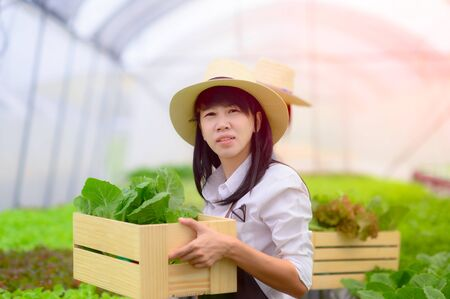 Young woman in takes care of Fresh vegetable Organic in wood style basket prepare serving harvest by woman farmer in hydroponic farm, greenhouse