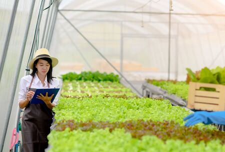 researcher inspecting the quality of organic vegetable to ensure to reach the standard hydroponic farming Banco de Imagens