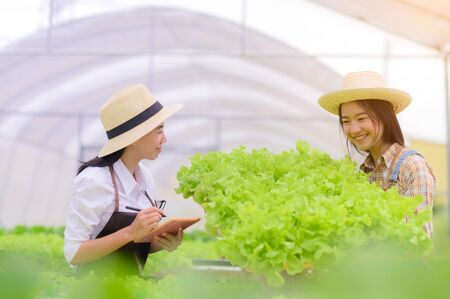 researcher and woman farmer in take care of Fresh vegetable Organic in wooden basket prepare inspection and harvest in hydroponic farm, greenhouse
