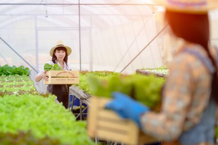 women in take care of fresh vegetable organic in wooden style basket , prepare serving harvest in hydroponic farm, greenhouse