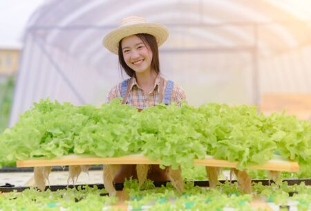 Young woman in takes care of Fresh vegetable Organic in wood style basket prepare serving harvest by girl farmer in hydroponic farm, greenhouse