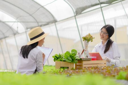 biochemist working in examine on plants and vegetable in organics hydroponics farm Banco de Imagens