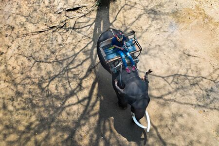 top aerial view of tourist riding on elephant taking photo shot in the wild nature
