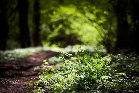 美しい自然の緑の背景、シダの森、森の中の草、春に美しい春の自然の森