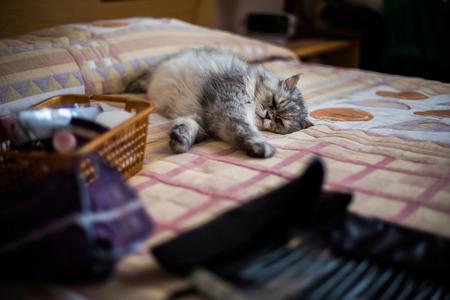furred: cat sleeps lying on the sofa, the cat tired, hard day, hard work