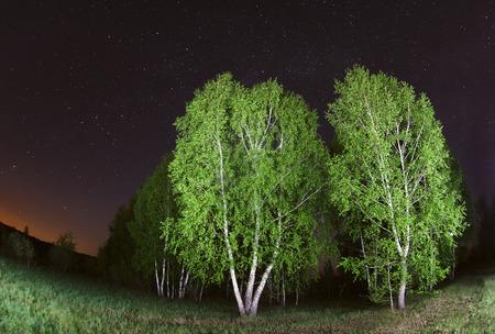 arboleda: cielo estrellado, la fotografía nocturna, astronómica, siluetas de los árboles de abedul y encendió la linterna Foto de archivo