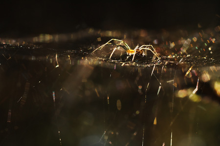 spider web: Spider on the web