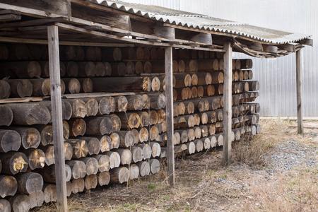 timber harvesting: sawmill, wood processing, timber drying, timber harvesting, drying boards, baulk