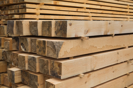 timber harvesting: sawmill, wood processing, timber drying, timber harvesting, drying boards, baulk