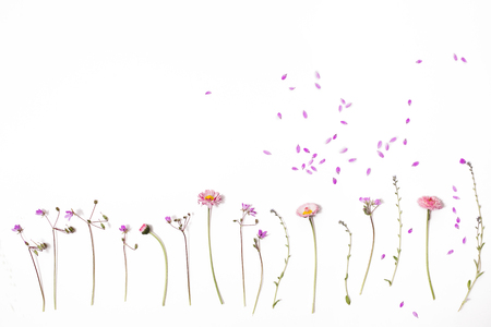 Floral pattern on a white background. Wild field flowers isolated on white background. lay flat 写真素材