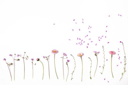 흰색 배경에 꽃 패턴입니다. 와일드 필드 꽃 흰색 배경에 고립입니다. 평면 배치