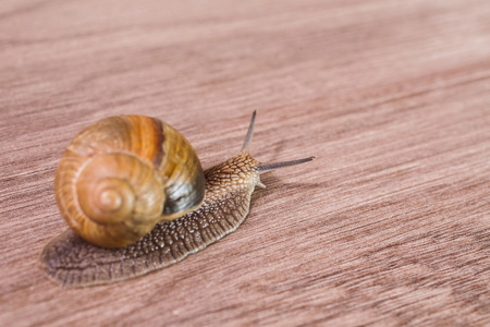 snail on a wooden background, with clam shell., speed of the network connection