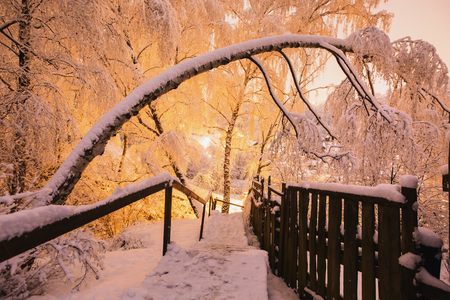 snowlandscape: Fabulous night winter forest in the snow. Winter time. Heavy snowfall. Trees in the snow. Beautiful landscape. The trunks and branches of trees. Stairs to the hill. Mountain landscape Stock Photo