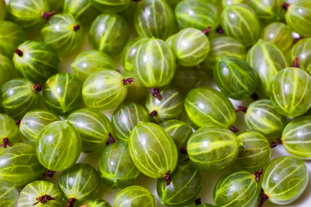 Ripe gooseberry closeup. Healthy foods rich in vitamins. Summer tasty berries. Stock Photo