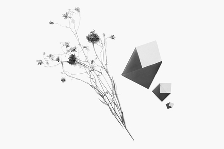 Black and white art photography monochrome, wildflowers, knapweed, small envelopes isolated on white background. Three letters. Write a letter. Greeting card. Copyspace, flat lay, top view.