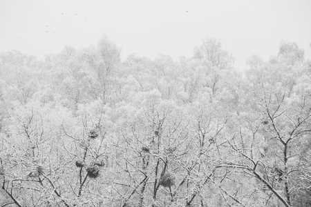 black and white art photography monochrome, fairy winter forest in the snow. Winter time. Heavy snowfall. Trees in the snow. Beautiful landscape. The trunks and branches of trees.