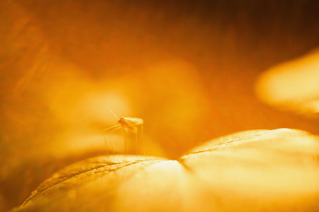 Warm sunlight. Abstract macro picture. Cobweb on grass. Wild nature. Life of insects. Yellow Magic