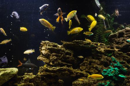 컬러 물고기 수족관에서 수영입니다. 바다 생물. 추상적 인 배경