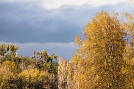 석양에서 빛이 노란 단풍 나무에 떨어진다. 가을 풍경