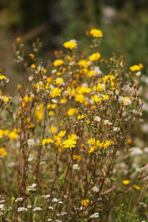 햇빛에 아름 다운 여름 노란색 꽃입니다. 야생의 자연 스톡 콘텐츠