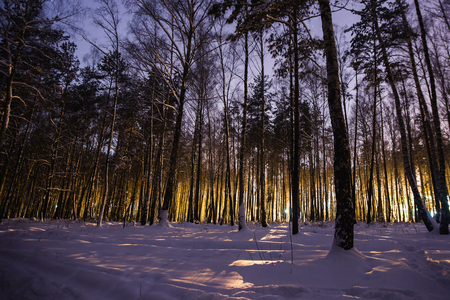 Pine trees in the snow in the forest with a warm glow. Winter beautiful starry night landscape. Astrophotography. Clear starry sky. Slow shutter speed. The spectacular sky. Scenic view.